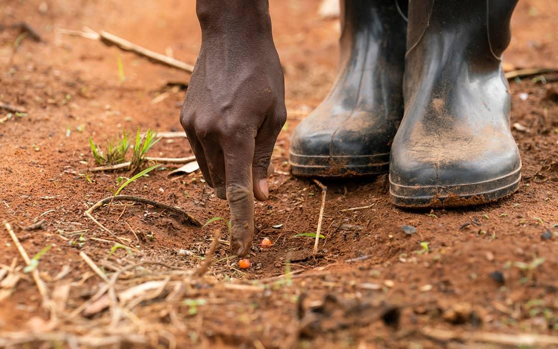 News: Durch neue Anbaumethoden Hunger stillen